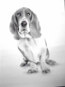 Basset Hound by Sean Coupe