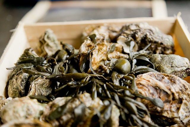 oysters galore, fresh as you can get