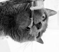 Drink jij genoeg water op kantoor? Concentratiedipje? Drink een glas water! Als je dat doet, kunnen je hersenen sneller werken; jij denkt sneller en bent helder van geest. Lees snel verder als je wilt weten wat het geheim van het wondermiddel water is en waarom dit zo belangrijk voor je is!