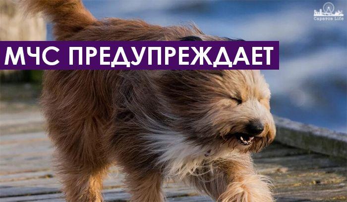 Завтра, 1 июня, в Саратове ожидается гроза и шквалистый ветер  В Саратовской области завтра прогнозируют шквалистый ветер во время грозы. Об этом предупреждает пресс-служба ГУ МЧС.  В ведомстве отмечают, что на территории региона  ожидается небольшой и умеренный дождь. Местами пройдет гроза и возможен град. Ветер юго-западный 6-11 м/с, днём порывы 13-18 м/с, при грозе шквалистое усиление ветра, порывы до 23 м/с. Температура ночью +12…+17°, в пониженных местах до +9°, днём +22…+27°, в…