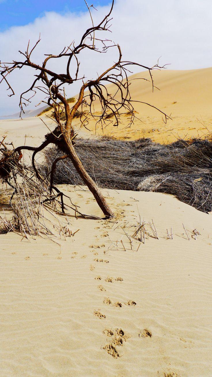 #desert scenery #nature #travel