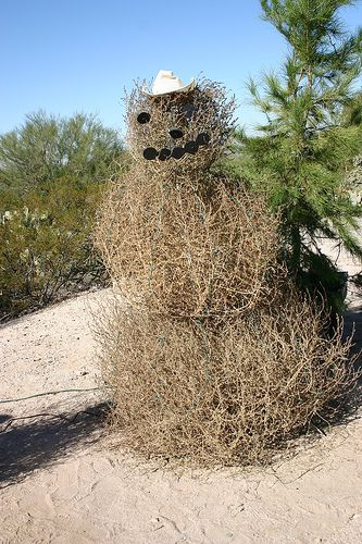 Image result for free blog pics of tumbleweeds
