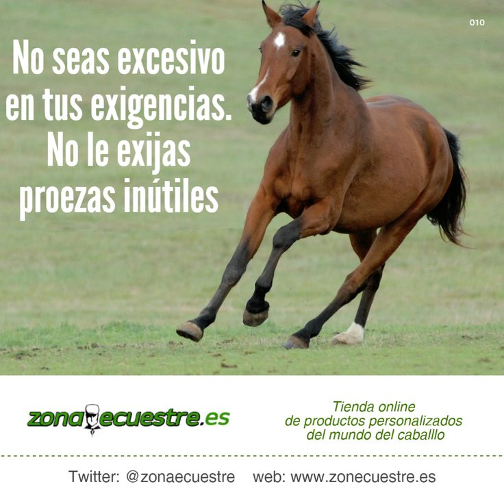 No seas excesivo en tus exigencias. No le exijas proezas inútiles. Visita http://zonaecuestre.es