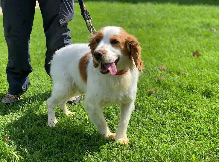 Preston Find A Pet Rspca Org Uk Dog Meet Dog Id Rehoming