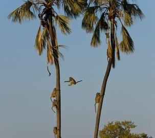 Hwange National Park, Zimbabwe  © Mike Myers #Africa  #Safari  #Zimbabwe