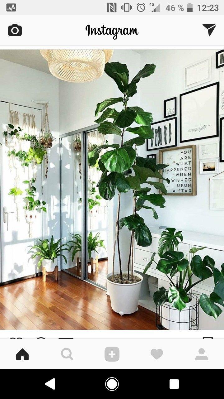 Urban jungle plant decor design crafts indoor plants ficus vintage designs