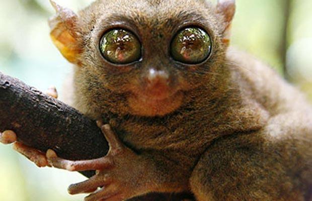 Endangered Animals in the Rainforest | Top 6 Endangered Animals