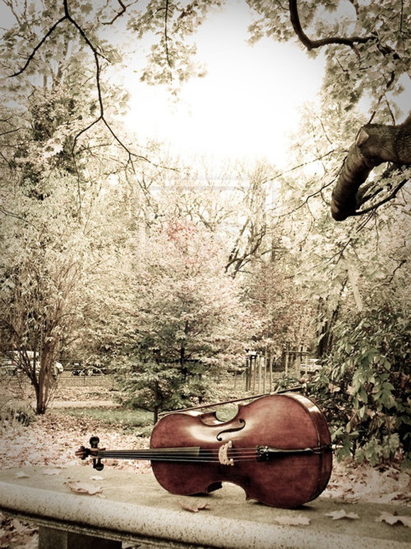 I love the cello, it's such a beautiful instrument!