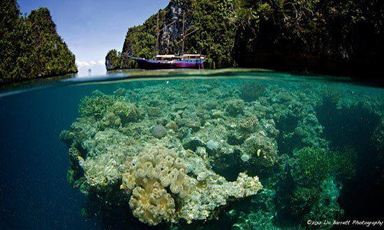 Wicked Diving: Dive Centers in Komodo, Raja Ampat & Similans