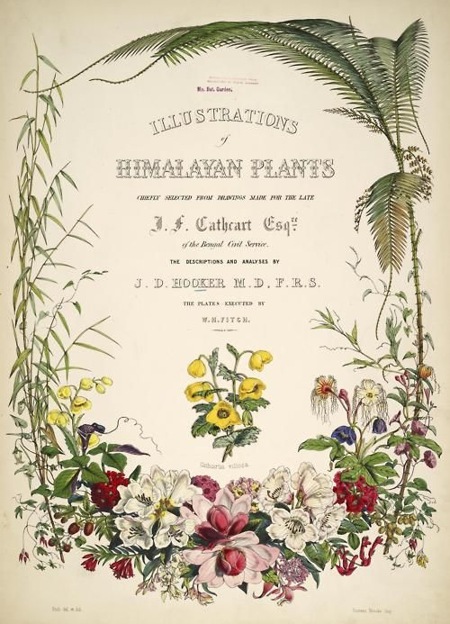 heracliteanfire:  Illustrations of Himalayan Plants chiefly selected from drawings made for the late J.F. Cathcart, Esq. of the Bengal Civil...