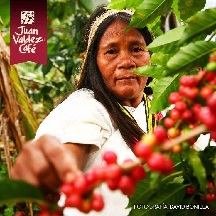 RECOLECTORA DE CAFE, COLOMBIA