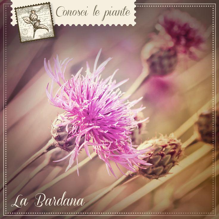 BARDANA. La bardana è una pianta comune in Italia, in particolar modo sulle Alpi, e apprezzata da secoli per le sue virtù. L'estratto delle radici fresche vanta diverse proprietà: può favorire la depurazione dell'organismo, il drenaggio dei liquidi e il benessere della pelle. Prova BARDANA TMG Dr. Giorgini per praparare una tisana e sfruttare tutte le virtù di questa pianta. #pelle #depurazione #bardana http://www.drgiorgini.it/index.php/a1-seribardtmg100a-drg-bardana-tmg-analcoolica-100-ml