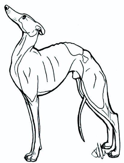 Greyhound lineart 1 by lotusdogz