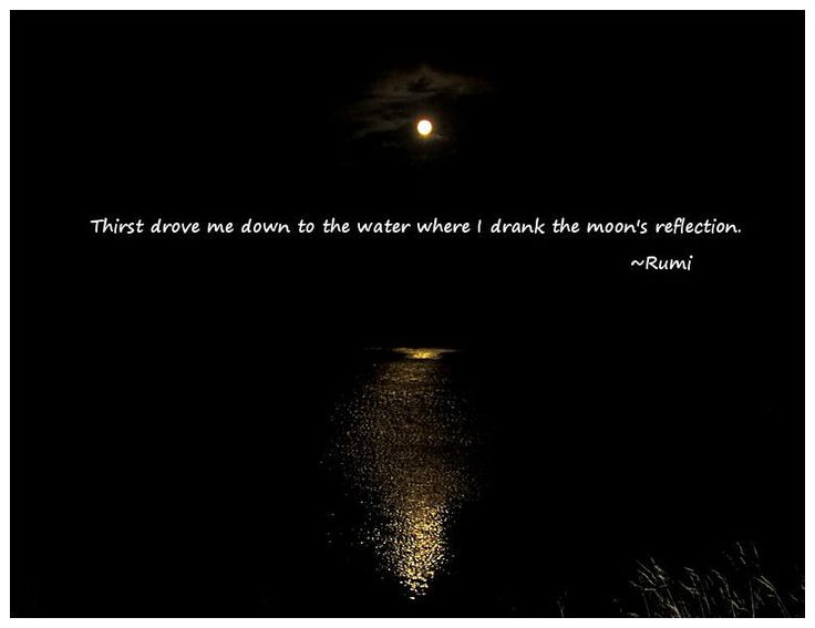 Thirst drove me down to the water where I drank the moon's ...