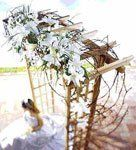 Inexpensive Budget DIY Ideas For Outdoor Wedding Arbor? — Good Question