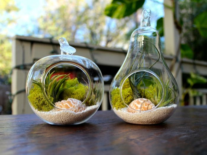 terrarium succulente sable blanc cailloux d coratifs coquillages r cipient en verre plante. Black Bedroom Furniture Sets. Home Design Ideas