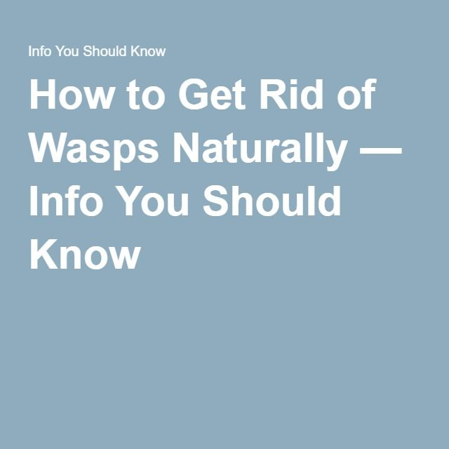 1000 ideas about wasp removal on pinterest commercial rental property bumble bees and bees. Black Bedroom Furniture Sets. Home Design Ideas