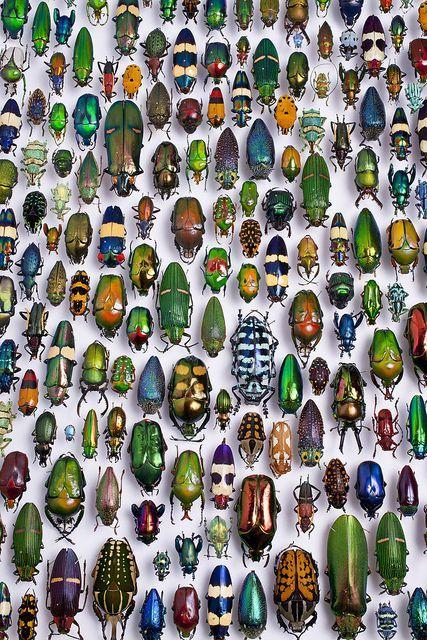 les 25 meilleures id es de la cat gorie insectes sur pinterest bogues beaux insectes et chenille. Black Bedroom Furniture Sets. Home Design Ideas