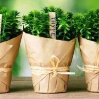 A legnépszerűbb gyógynövények, melyeket ismerni kell | Sokszínű Vidék - Ahol a jó élet lakik