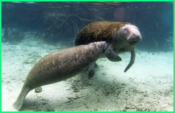 7700 Gambar Hewan Mamalia Yang Hidup Di Air Terbaik