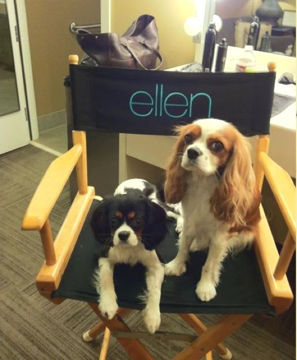 Lexi and Harley (Julianne Hough's Cavaliers) at the Ellen Show