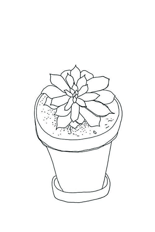 how to draw a succulent step by step