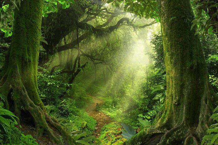 Tropical Jungle Vinyl Wall Mural Landscapes 338966309455562395 Landscape Nature Photography Landscape Pictures