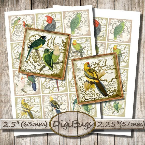 Parrot Images, Vintage Map, Digital Collage Sheet, 2.25 inch, 2.5 inch Squares, Printable Parrots, Decoupage Paper, Instant Download, a2
