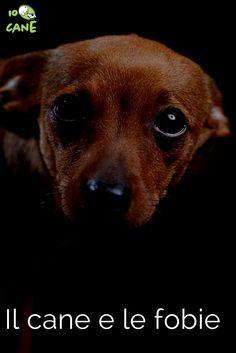 Scopri come curare le fobie del tuo cane.