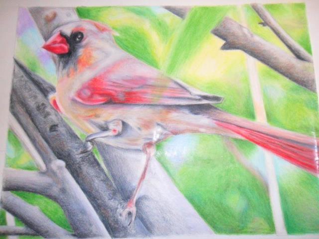 Female Cardinal, drawn by Sue Walz Design