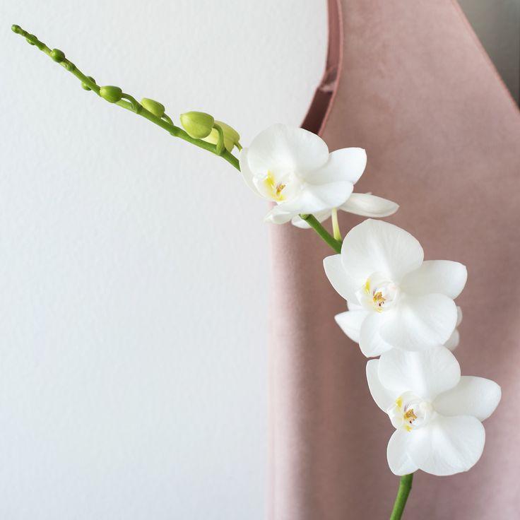 #flowers #flowergirl #flowerstagram #flowerphotography #instafeed #instagram #inspiration #white #minimalism #minimalist #monochrome #orchid #pink #scandistyle #flowermagic #flowerpower #lifestyle #lifestylephotography #lifestyleblogger #designblog #designbloggarna #blommor #whiteandpink #flowerporn