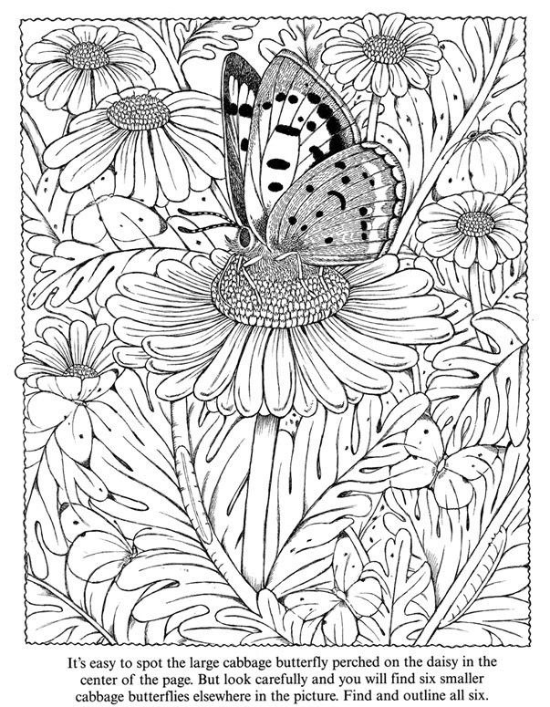 Colouring Pages Of Flowers And Butterflies : 3315 best coloring images on pinterest