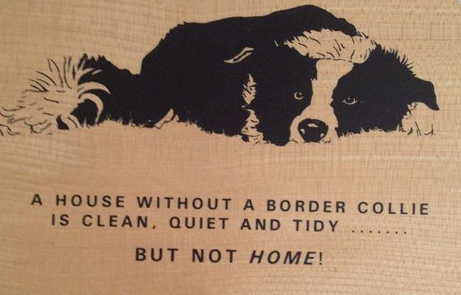 Border Collie.