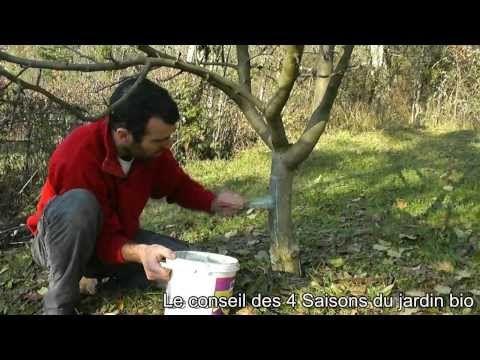Terre vivante - Badigeonner les arbres fruitiers - les conseils - Les 4 Saisons du jardin bio