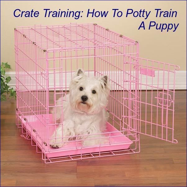 Crate Training: How To Potty Train A Puppy  ... see more at PetsLady.com ... The FUN site for Animal Lovers