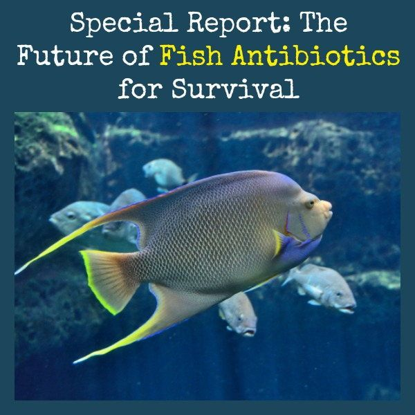 1000 images about prepare survive on pinterest for Erythromycin for fish
