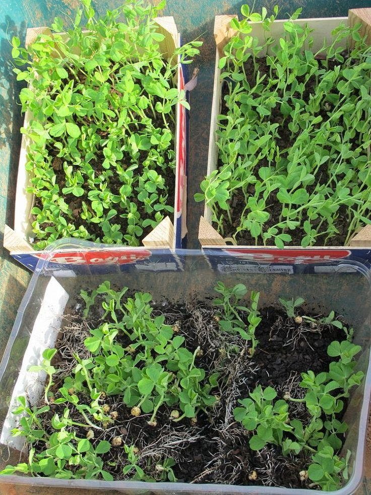 Hometalk :: How to Get Gardening Supplies for Free  now everyone can do this