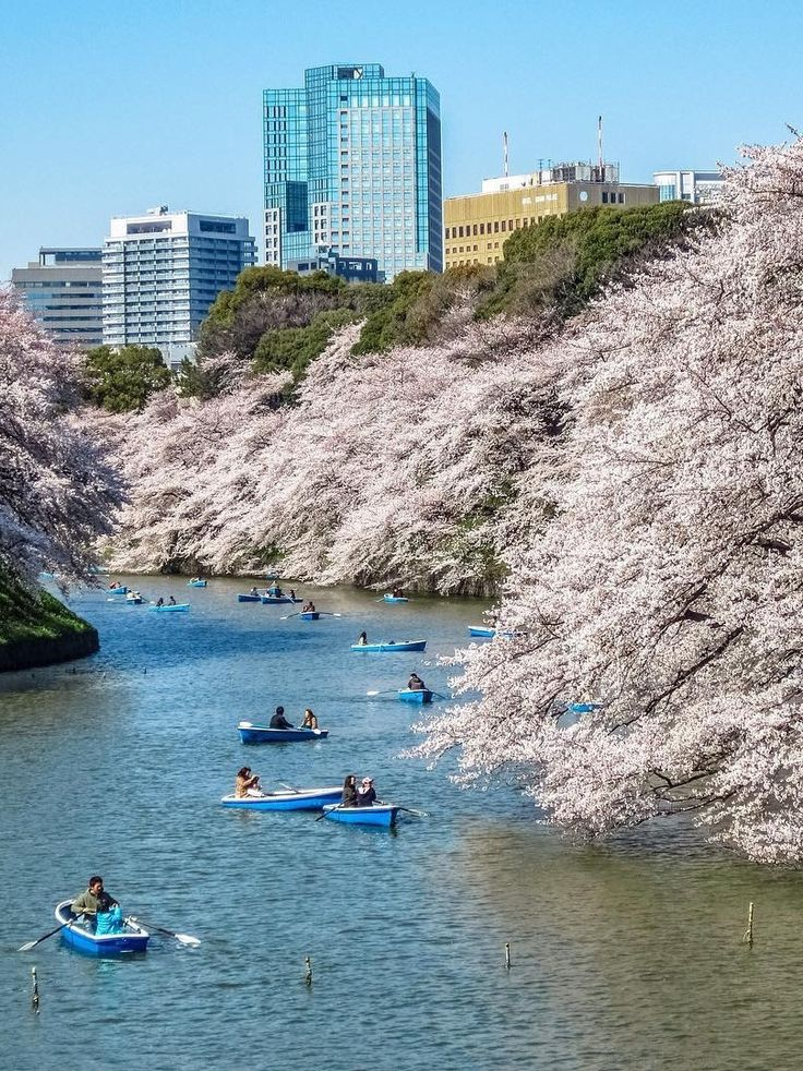 Chidorigafuchi, Tokyo, Japan, 千鳥ヶ淵, 東京