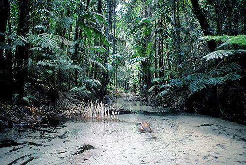 Tropical Rain Forest, Fraser Island