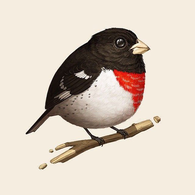 Rose Breasted Grosbeak Birds Painting Bird Art Birds