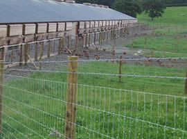 High Tensile Fence - Highest Security to Your Animals