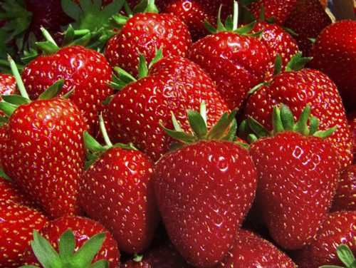 Fresh fresh Strawberries