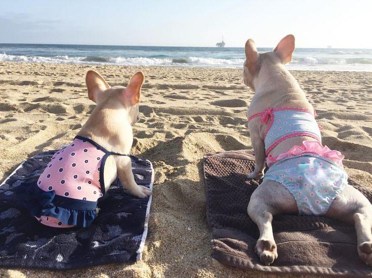 French Bulldog Beach Bums