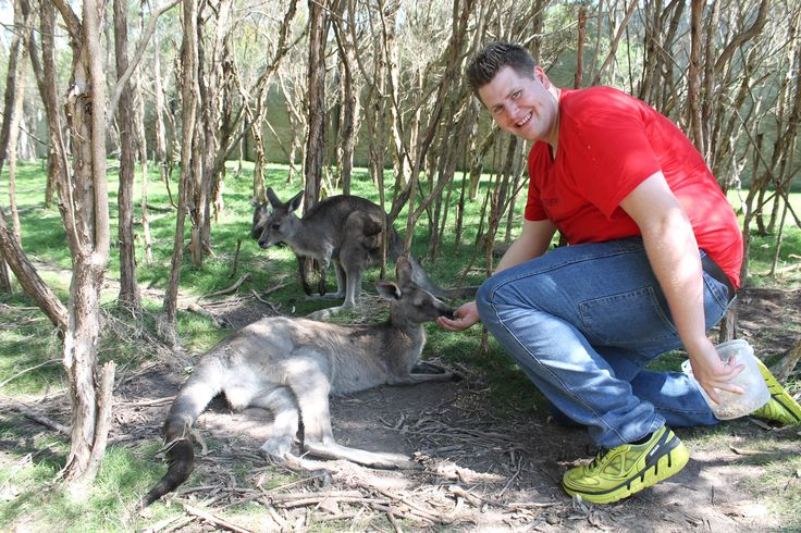 Animal Encounter - Kangaroo's
