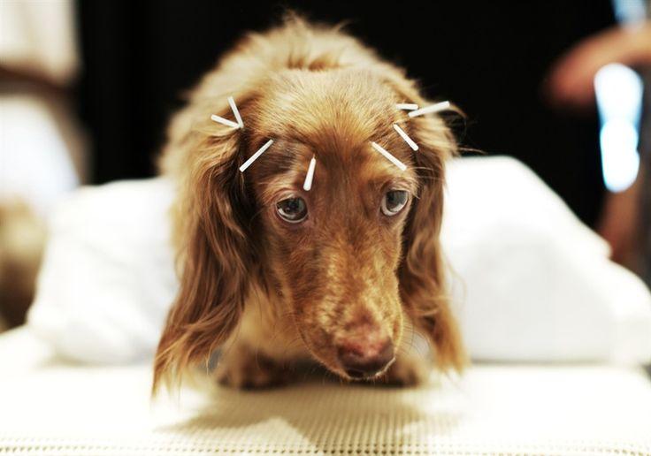 dachshund pretty - Buscar con Google