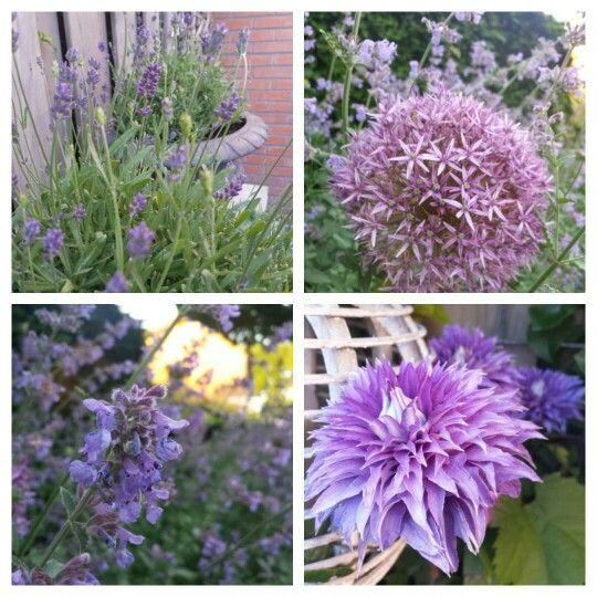 Purple in my garden <3