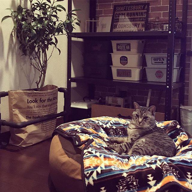 こっさんお気に入りのビーズクッション(*☻-☻*)1日のほとんどはこの場所でマッタリ☆彡このクッションは息子がお年玉で買ってくれた大切な🎁 #ねこ#猫#ネコ#にゃんこ#サバトラ#元野良猫#野良猫出身#にゃんだふるらいふ#にゃんすたぐらむ#猫のいる暮らし#ニトリ#ビーズクッション#猫好き#ねこ部#愛猫#こたろう#まったり#cat#cats#catsofinstagram