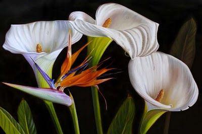 Pintura Moderna al Óleo: Bonitas pinturas con flores cartuchos