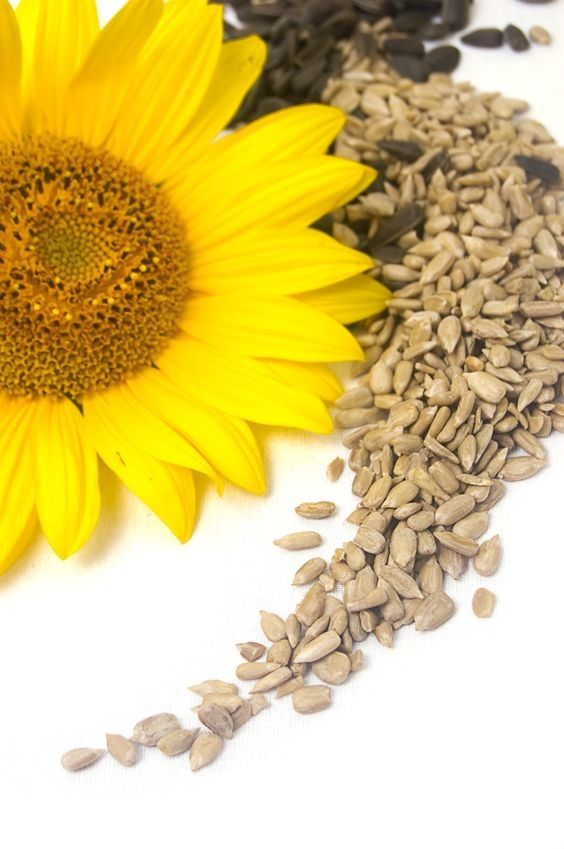 Sunflower Seeds are a Great Source of Folic Acid! Repin and read this article to make sure you get all the benefits of this great plant!