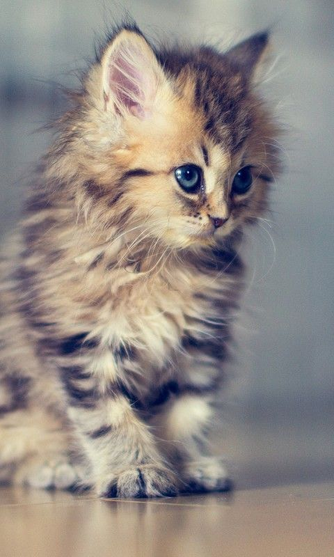 """Kittens are wide-eyed soft and sweet with needles in her jaws and feet."" --Pam Brown"
